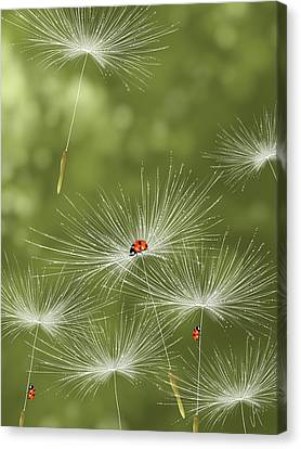 Ladybug Canvas Print by Veronica Minozzi