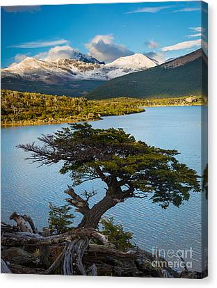 Laguna Capri Tree Canvas Print by Inge Johnsson
