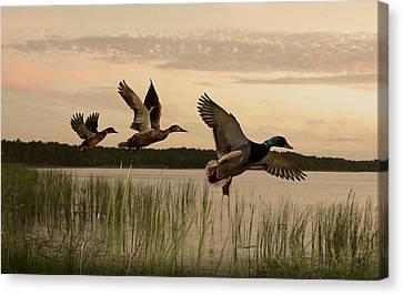Lake Tarpon Ducks Canvas Print by Schwartz