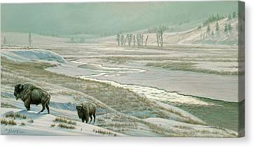 Lamar Valley - Bison Canvas Print by Paul Krapf