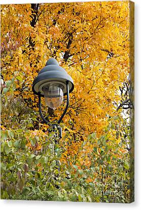 Lamp In The Autumn Leaves Canvas Print by Michal Boubin