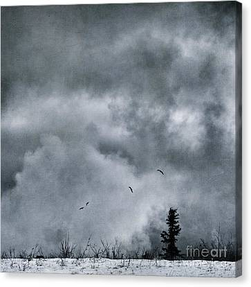 Land Shapes 5 Canvas Print by Priska Wettstein