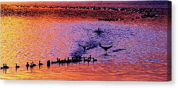 Landing Canvas Print by Will Boutin Photos