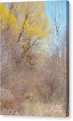 Landscape A10j Taos Nm Canvas Print by Otri Park
