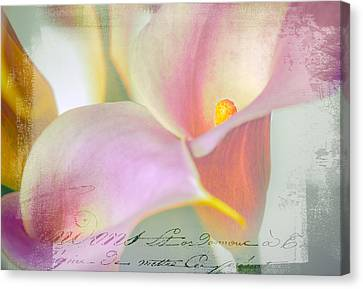 Language Of A Calla Lily Canvas Print by Julie Palencia