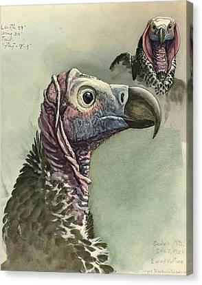 Lappet Faced Vulture Canvas Print by Louis Agassiz Fuertes