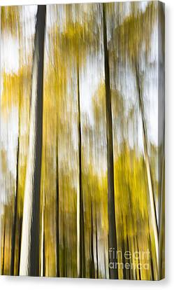 Larch In Abstract Canvas Print by Anne Gilbert