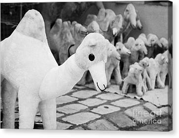 Large Soft Toy Stuffed Camel Souvenir At Market Stall In Nabeul Tunisia Canvas Print by Joe Fox