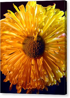 Large Yellow Flower Close Up Canvas Print by Cindy Boyd