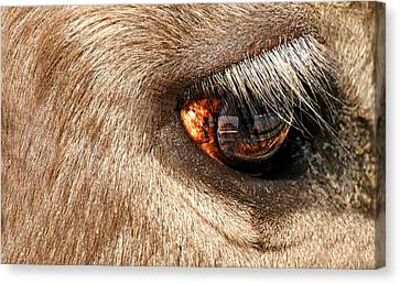 Lashes Canvas Print by Diana Angstadt