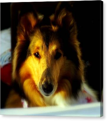 Lassie Come Home Canvas Print by Karen Wiles