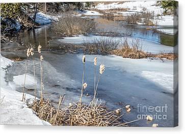 Last Days Of Winter Canvas Print by Jola Martysz