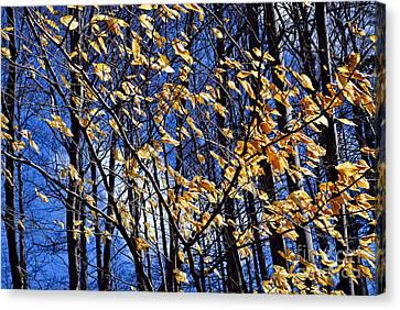 Late Fall Canvas Print by Elena Elisseeva
