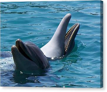 Laughing Dolphins Canvas Print by Noreen HaCohen