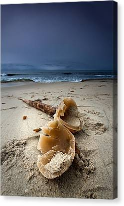 Laughing With A Mouth Full Of Sand Canvas Print by Peter Tellone