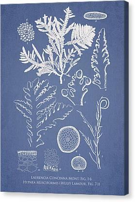 Laurencia Concinna And Hypnea Musciformis Canvas Print by Aged Pixel
