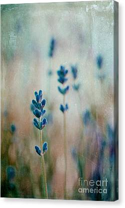 Lavandines 02 - 222t03 Canvas Print by Variance Collections