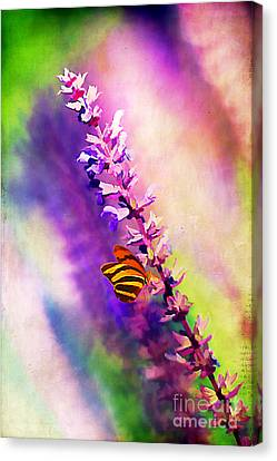Lavender And Butterlies Canvas Print by Darren Fisher