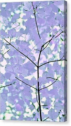 Lavender Blues Leaves Melody Canvas Print by Jennie Marie Schell
