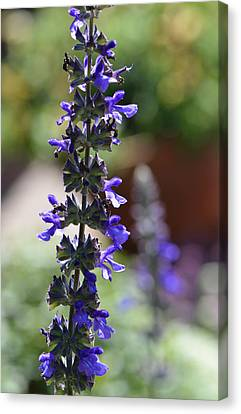 Lavender Dance - Floral Photography By Sharon Cummings Canvas Print by Sharon Cummings