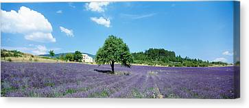 Lavender Field Provence France Canvas Print by Panoramic Images