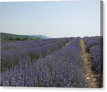 Lavender Sky Canvas Print by Pema Hou