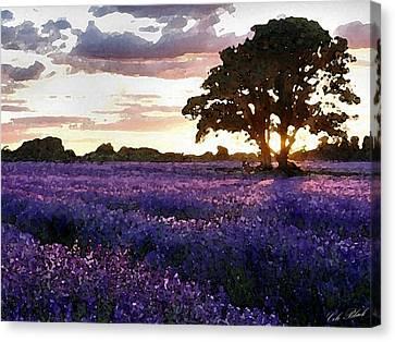 Lavender Sunset Canvas Print by Cole Black