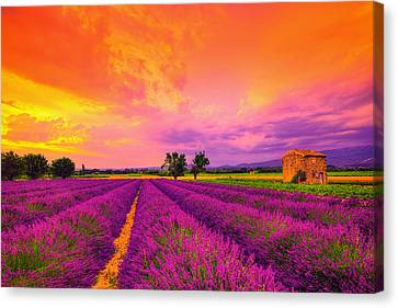 Lavender Sunset Canvas Print by Midori Chan