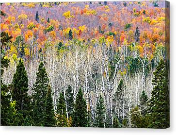 Layers Of Autumn Canvas Print by Mary Amerman