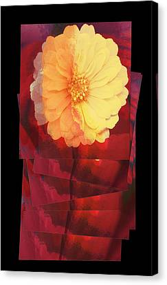 Layers Of Yellow Flower Canvas Print by Susan Stone