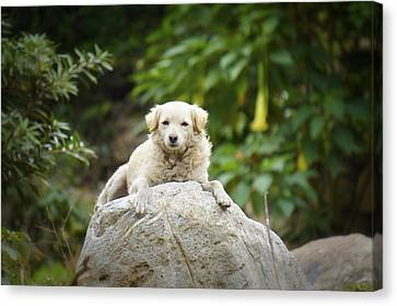 Lazy Dog Canvas Print by Aged Pixel