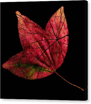 Leaf And Tree Canvas Print by Jon Woodhams