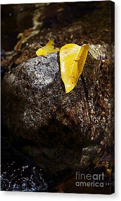 Leaf On Rock Canvas Print by ELITE IMAGE photography By Chad McDermott