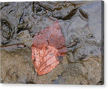 Leaf On The Riverbank Canvas Print by Paula Tohline Calhoun