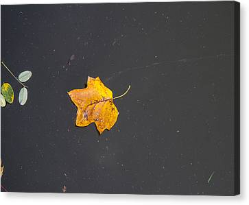 Leaf On Water Study  Canvas Print by Tim Fitzwater