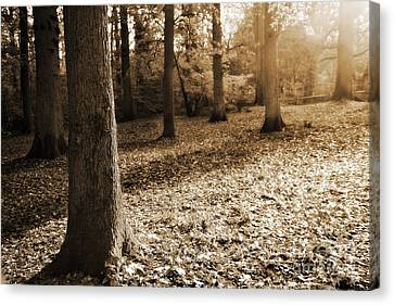 Leafy Autumn Woodland In Sepia Canvas Print by Natalie Kinnear
