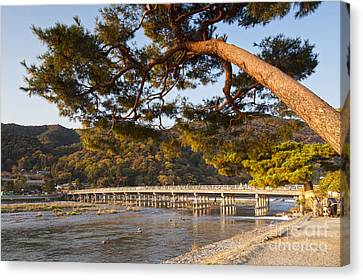 Leaning Pine Tree Arashiyama Kyoto Japan Canvas Print by Colin and Linda McKie