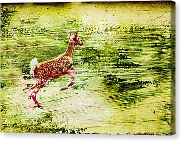 Leap Into Spring Canvas Print by Jon Van Gilder