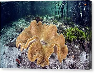 Leather Coral Canvas Print by Ethan Daniels