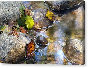 Leaves And Needles Canvas Print by Sharon Talson