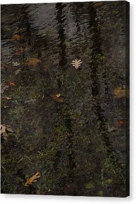 Leaves In The Waves Canvas Print by Guy Ricketts