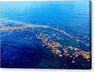 Leaves On The Ocean Canvas Print by Sharon Talson