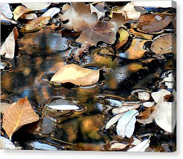 Leaves On The Waters Canvas Print by Chris Gudger