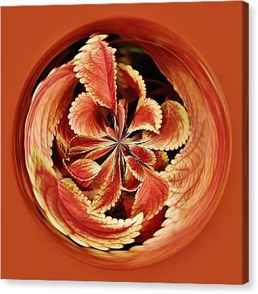 Leaves Orb Canvas Print by Paulette Thomas