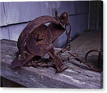 Leg Hold Trap  Canvas Print by Rob Mclean