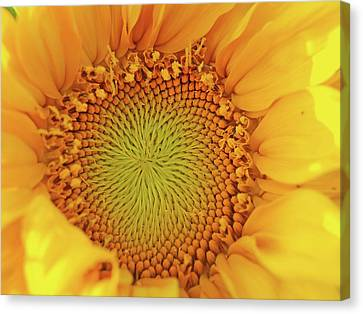 Lemon Canvas Print by Tom Druin