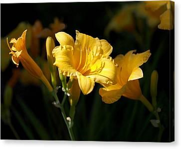 Lemon Yellow Daylilies Canvas Print by Rona Black
