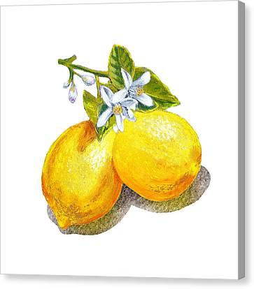 Lemons And Blossoms Canvas Print by Irina Sztukowski