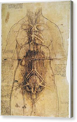Leonardo: Anatomy, C1510 Canvas Print by Granger