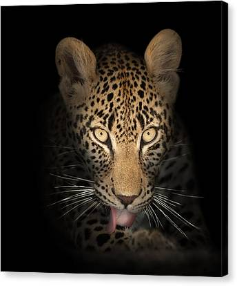 Leopard In The Dark Canvas Print by Johan Swanepoel